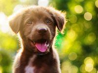 Co chce powiedzieć twój pies?