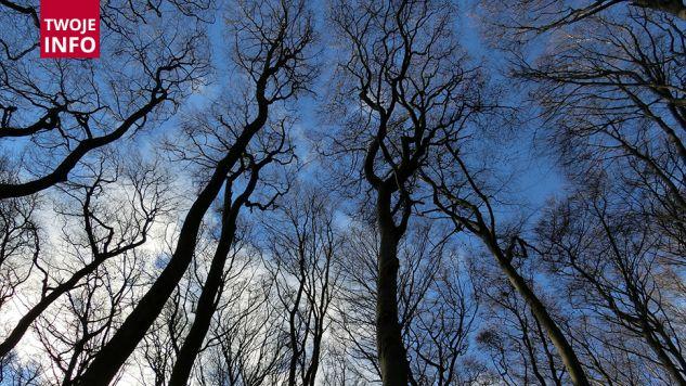 Porywacze wywieźli nastolatkę do lasu (fot.pixabay.com/lbokel)