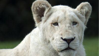Natura w Jedynce – Białe lwice. cz. 1. Na przekór losowi