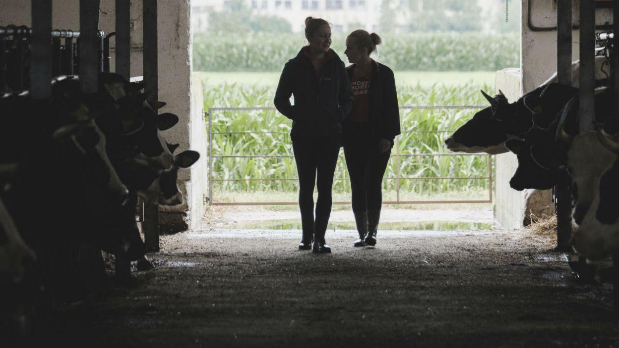 Czas nakarmić krowy! (fot. TVP)