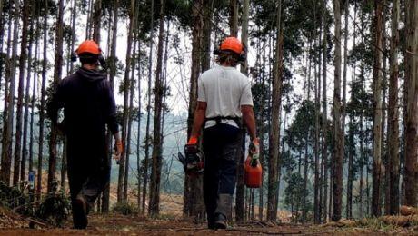 Podczas wykonywania prac na mężczyznę upadło drzewo