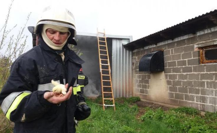 Ogień gasiło łącznie około 50 strażaków (fot. facebook.com/OSP-Bratian)