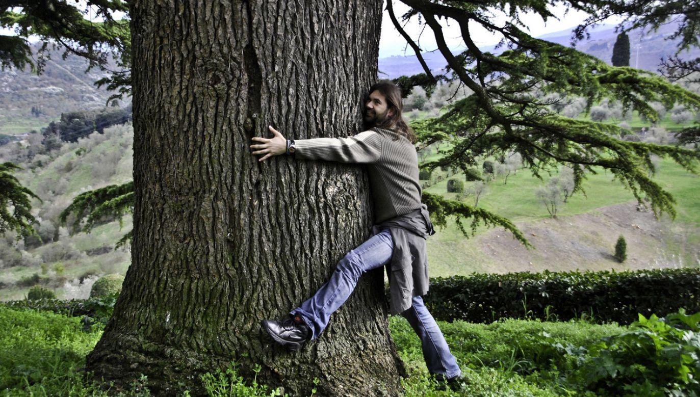 Zakaz wchodzenia na drzewa pod groźbą surowej kary za jego złamanie wpisano niedawno do rozporządzenia straży miejskiej w Trieście (fot. pixabay.com/Mojpe)