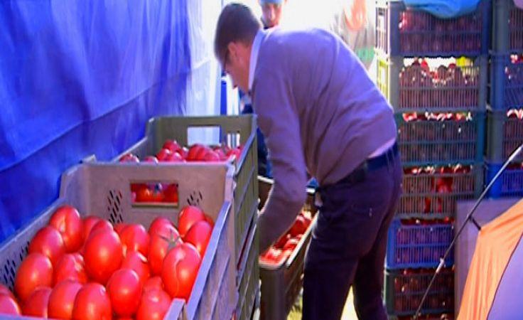 1,5 tony pomidorów z Przytocznej do... rzucania się w najlepsze