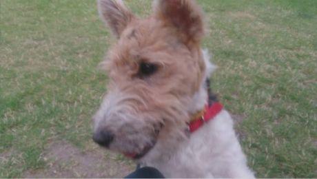 Nieznany sprawca zastrzelił psa z wiatrówki