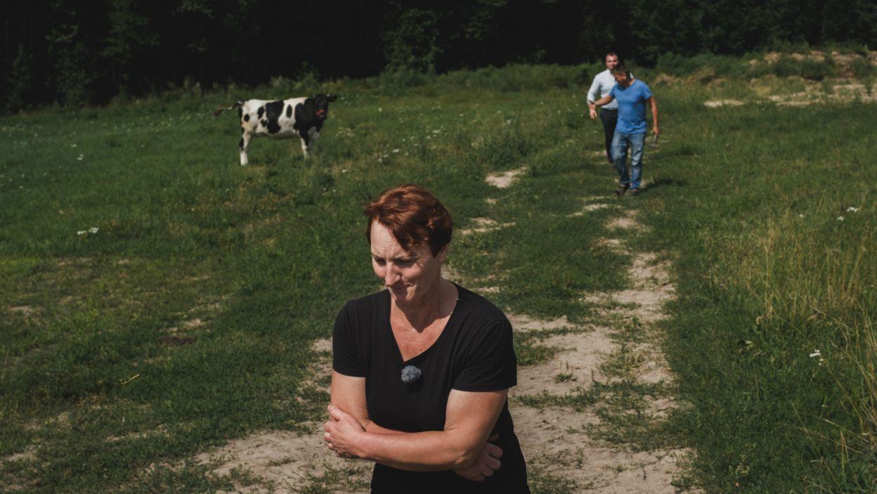 U Grzegorza, panie od razu miały okazję poznać czym jest praca na wsi. Zwierzęta przecież nie zwracają uwagi na przybycie gości (fot. TVP)
