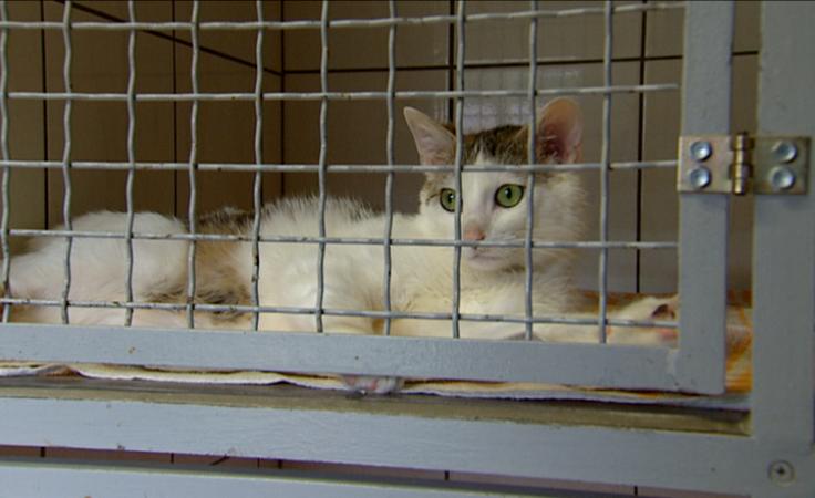 Pomagali bezdomnym kotom. Akcja budowy budek w schronisku