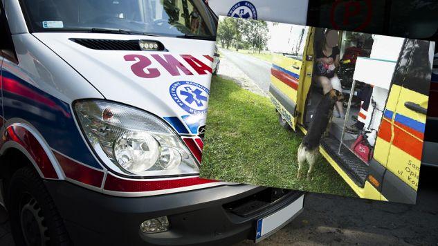 Właściciel psa został ukarany 100-złotowym mandatem (fot. tvp.info/Paweł Chrabąszcz/KPP)