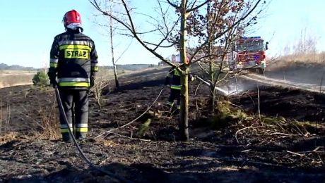 Wiosenna zmora strażaków. Znów wyjeżdżają do pożarów traw