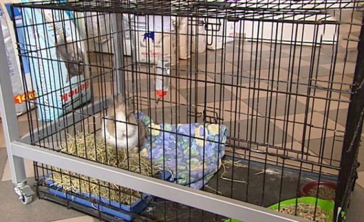 Okno życia dla zwierząt działa w Solcu Kujawskim
