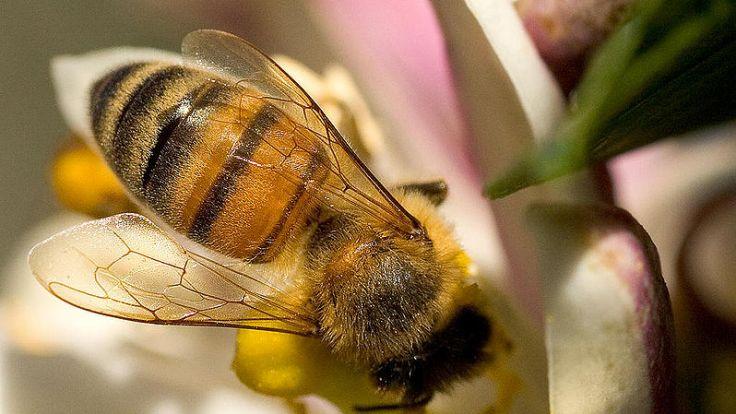Do Olsztyna przyjechali pszczelarze i miłośnicy miodu z całego regionu.
