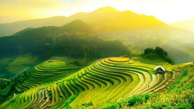 Nela Mała Reporterka: Kraina ryżu