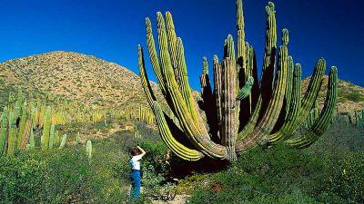 BBC w Jedynce: Dziki Meksyk, cz. 3. Gorąca Północ