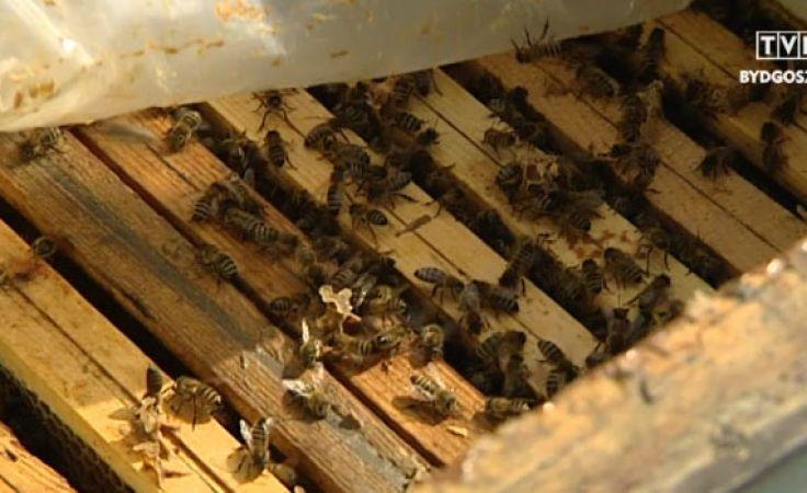 Pszczelarze liczą straty po zimie