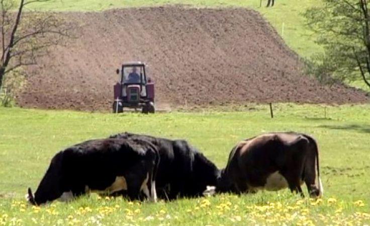 W ubiegłym roku prawie 80 proc. przetargów na dzierżawę stanowiły przetargi ograniczone