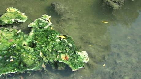 Ekologiczny alarm -  kontrola w oczyszczalni ścieków w Jedliczu