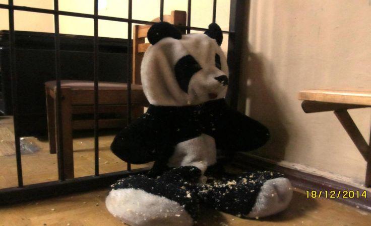 Misiu panda z amfetaminą (fot. KWP w Szczecinie)