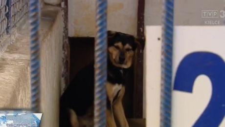 Adoptowali psa, razem z nim dostali... pasożyta