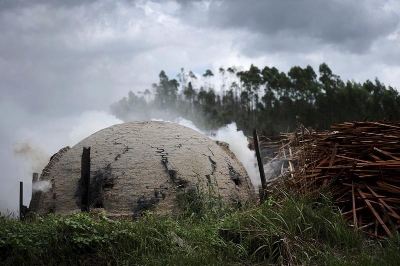 Piece do wyrobu węgla drzewnego niedaleko autostrady PA 150 w Goianii (fot. REUTERS/Lunae Parracho)