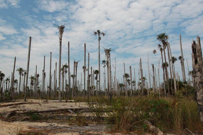 Wylesiony teren w pobliżu nielegalnej kopalni złota (fot. REUTERS/Miguel Bellido/El Comercio)