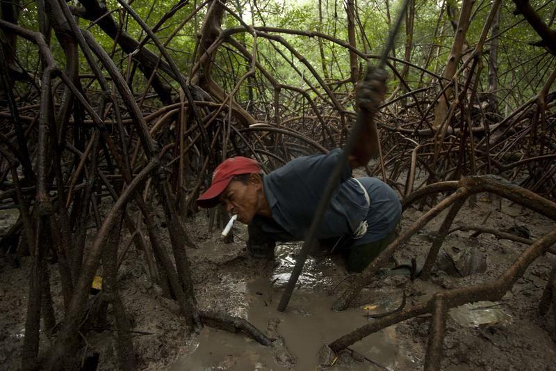 Nielegalny połów krabów (fot. REUTERS/Paulo Santos)