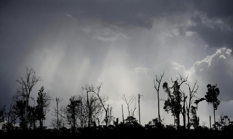 Pozostałości dziewiczej Amazonki po oczyszczeniu z drewna wzdłuż autostrady PA 150, niedalekoi Moju (fot. REUTERS/Lunae Parracho)