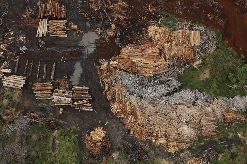 Tartaki przerabiające nielegalnie wycięte drzewa (fot. REUTERS/Nacho Doce)