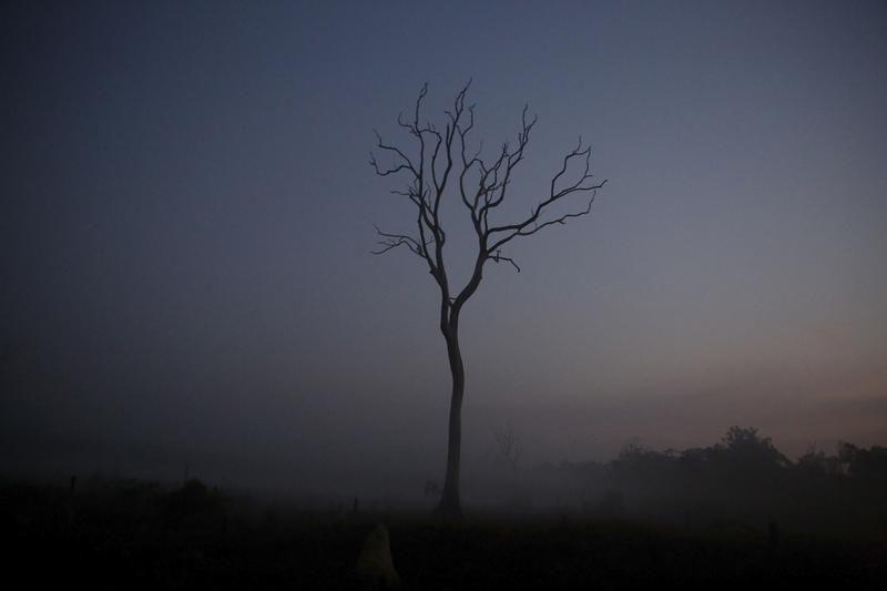 Drzewo na pogorzelisku w wiosce Rio Pardo (fot. REUTERS/Nacho Doce)