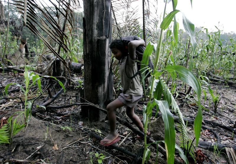 Spalony las pod uprawę kukurydzy (fot. REUTERS/Rickey Rogers)