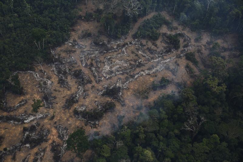 Wykarczowany teren z lotu ptaka (fot. REUTERS/Nacho Doce)