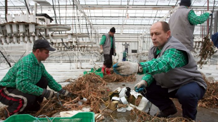Easy come, easy go: Ukrainian workers 'may head to Germany
