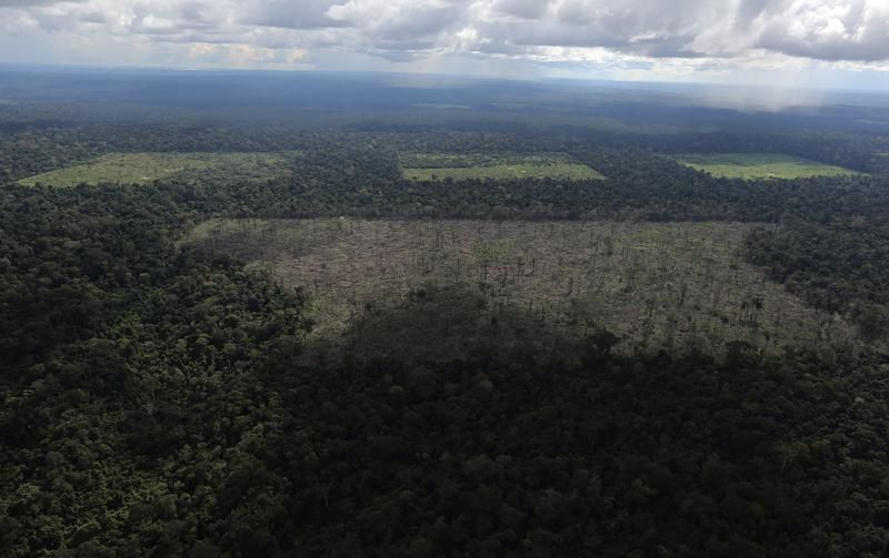 Widok z lotu ptaka na karczowane tereny (fot. REUTERS/Nacho Doce)