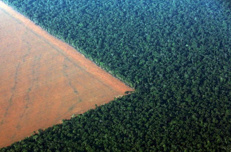Wykarczowany las deszczowy pod uprawę soi (fot. REUTERS/Paulo Whitaker)