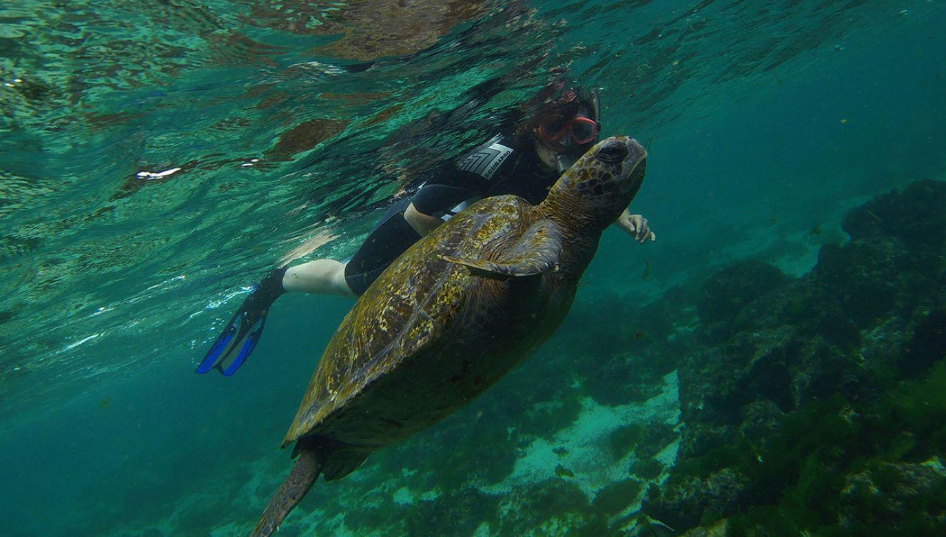 Zdaniem naukowców, przedstawicieli tego gatunku może być więcej (fot. Reuters)