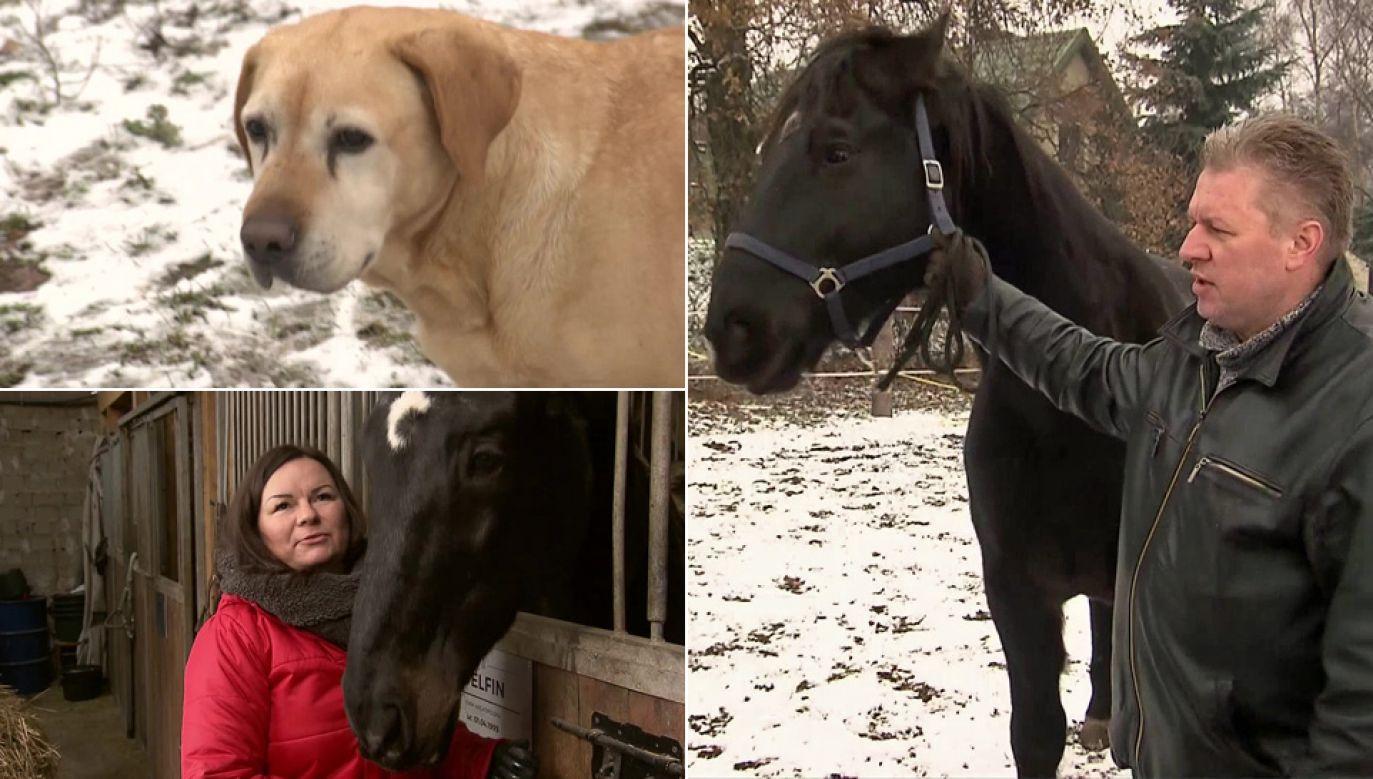 """Stowarzyszenie """"Zakątek weteranów"""" opiekuje się policyjnymi psami i końmi (fot. TVP1)"""
