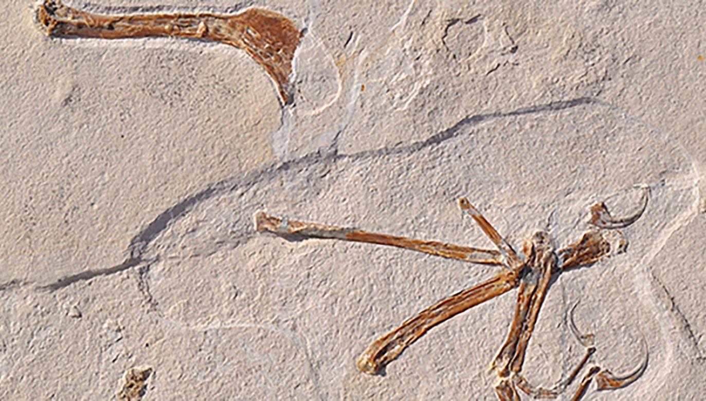 Naukowcy odkryli jedynie fragment szkieletu (fot. LMU Munich)
