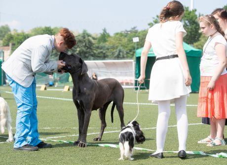 Psy prezentują się na stadionie CHKS-u