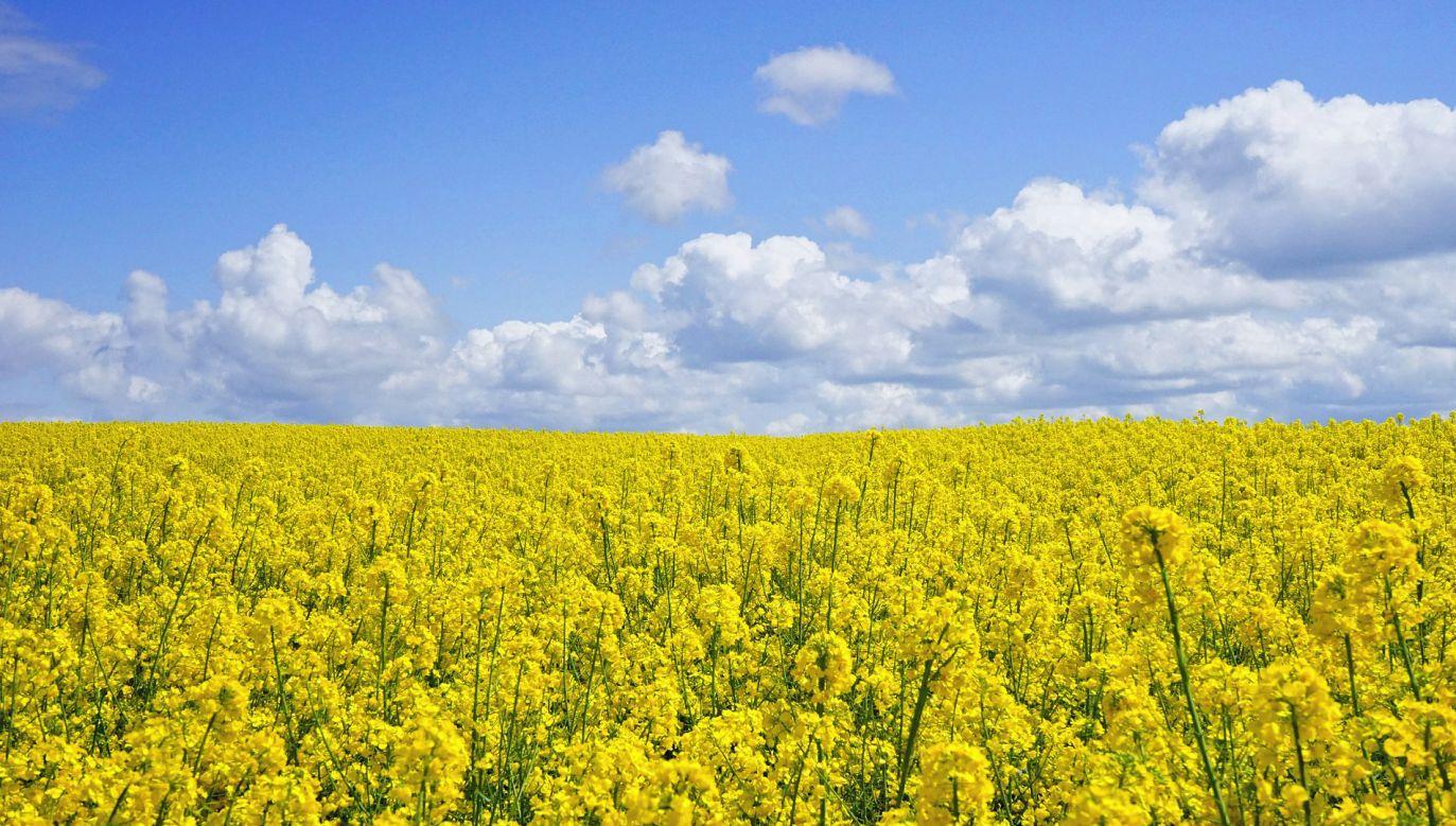 MRiRW opublikowało spot promujący propozycje rządu PiS dla rozwoju rolnictwa (fot. Pixabay/Detmold)