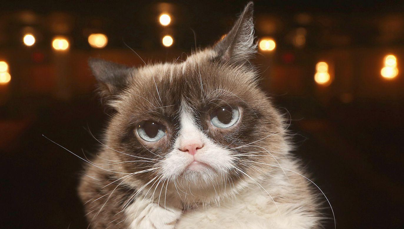 Grumpy Cat zasłynął w 2012 roku za sprawą memów (fot. Bruce Glikas/FilmMagic)