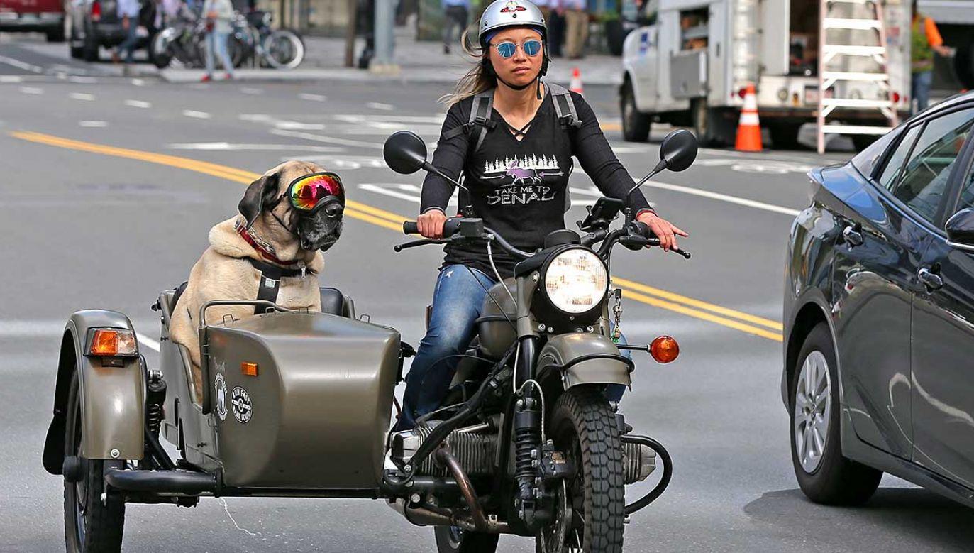 Badania pokazały, że psy w dużej mierze przypominały swoich właścicieli (fot. David L. Ryan/The Boston Globe/Getty Images)