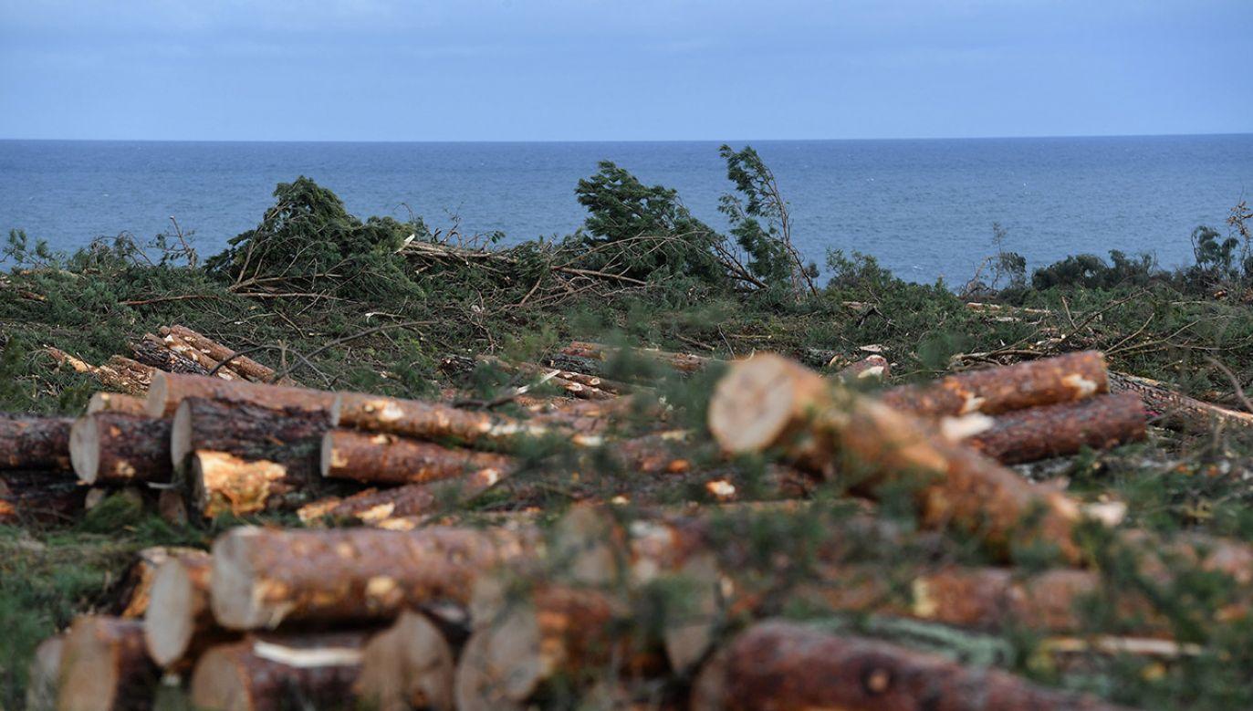 Drewno, które zostało po wycince ma być uprzątnięte do końca lutego (fot. PAP/Marcin Gadomski)