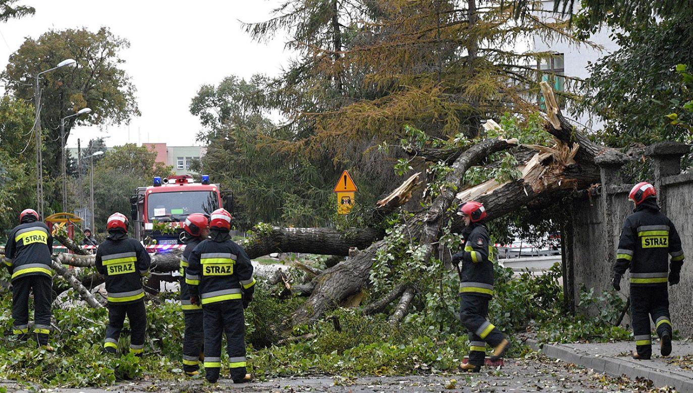 Strażacy usuwają drzewo, które złamało się podczas sobotniej, porannej wichury jaka przeszła nad Przemyślem (fot. PAP/Darek Delmanowicz)