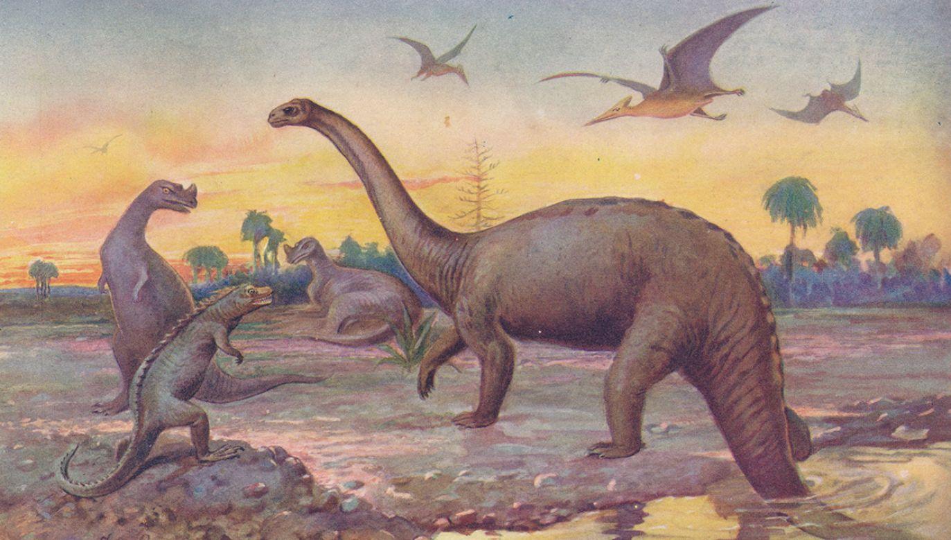 Naukowcy są zgodni, że przyczyną zagłady dinozaurów było uderzenie w Ziemię planetoidy (fot. The Print Collector/Getty Images)