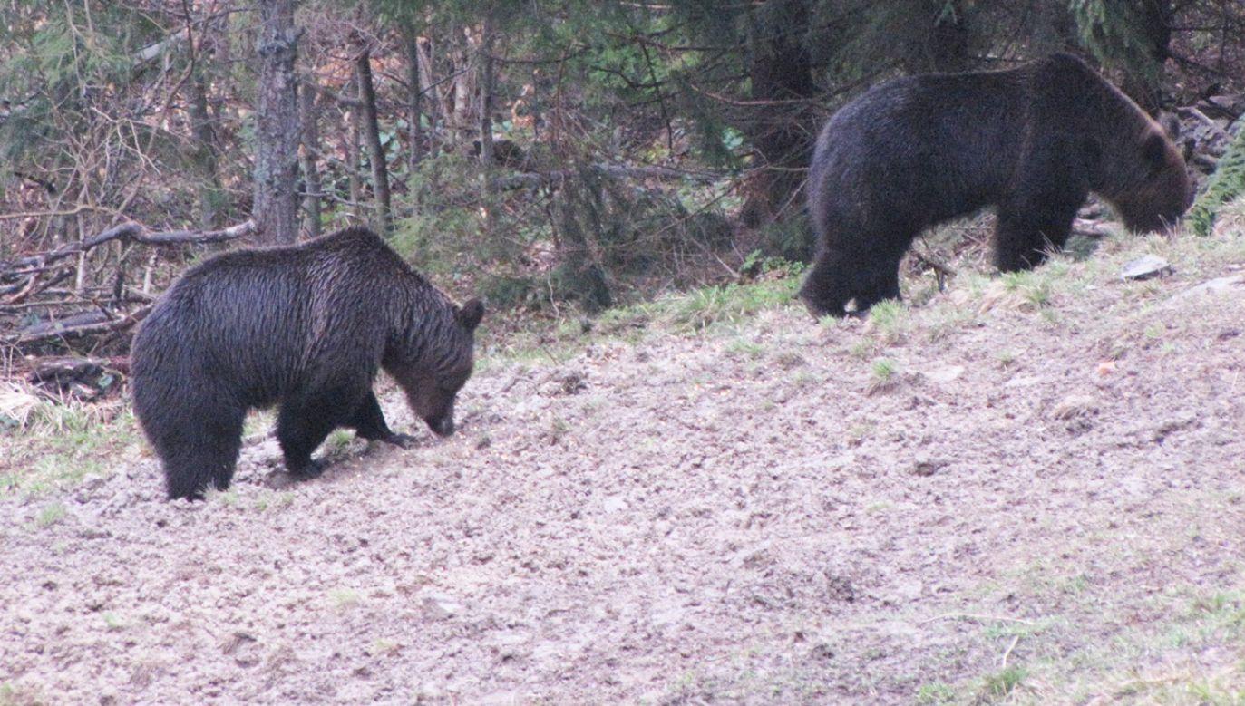 To zdjęcie wykonano kilka dni temu w Bieszczadach (fot. FB/Centrum Promocji Leśnictwa w Mucznem)