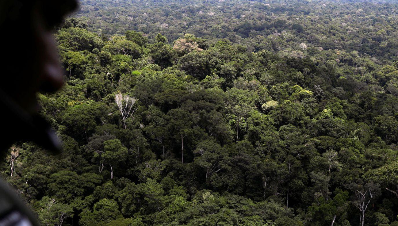 Chrząszcze odkryto w lasach deszczowych (rys. REUTERS/Ricardo Moraes)