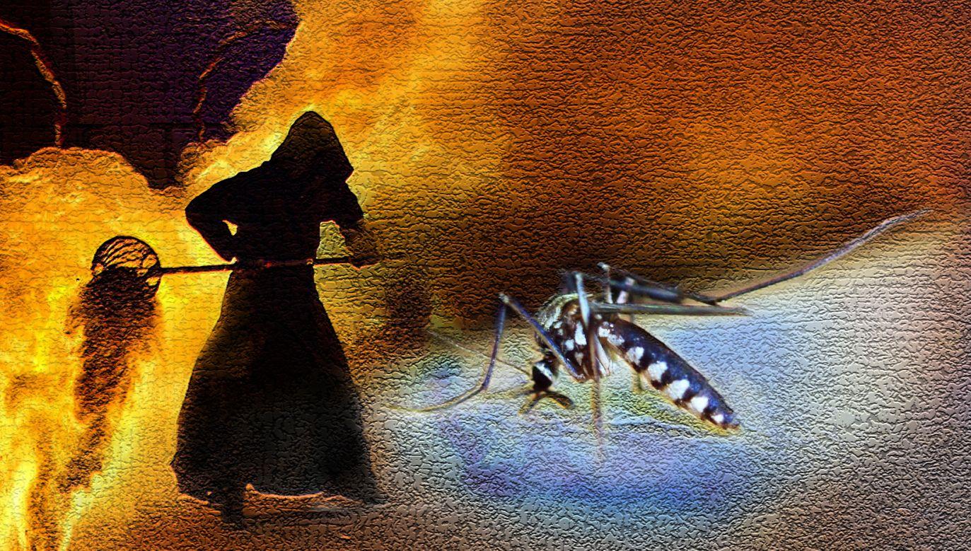 Trwa walka z komarami w Rzymie (fot. Pixabay)