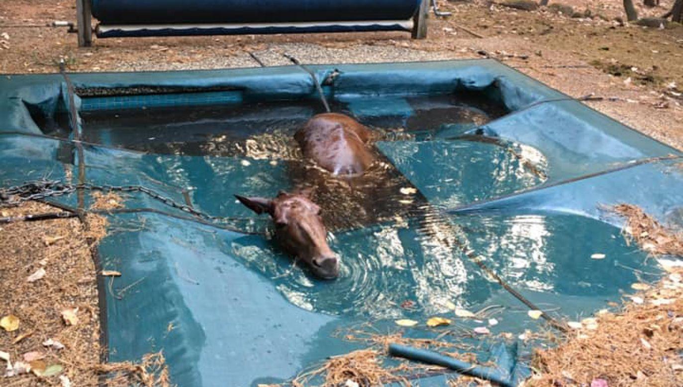 Nie wiadomo, jak zwierzę znalazło się w basenie (fot. Facebook/Jeff Hill)
