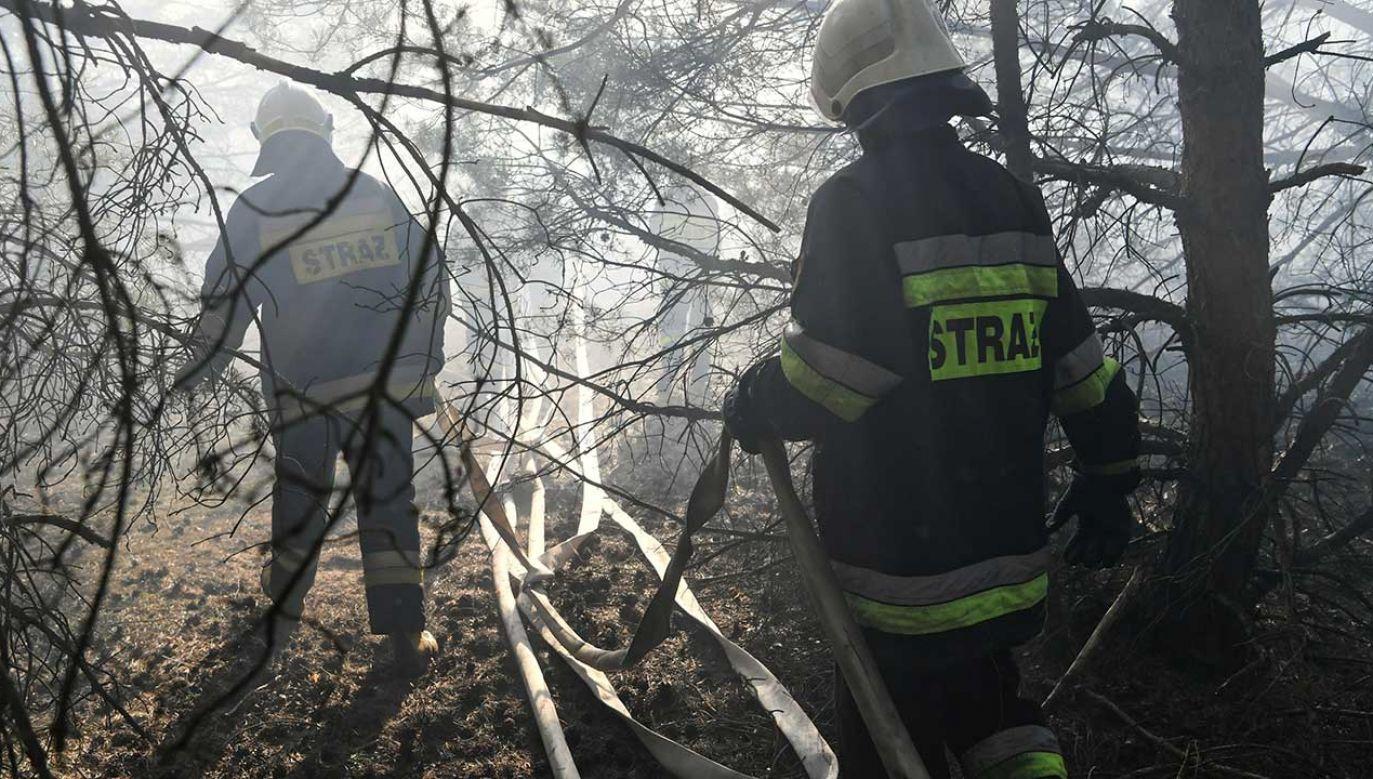 Ogień zajął 15 hektarów lasu (fot. arch. PAP/Tytus Żmijewski)