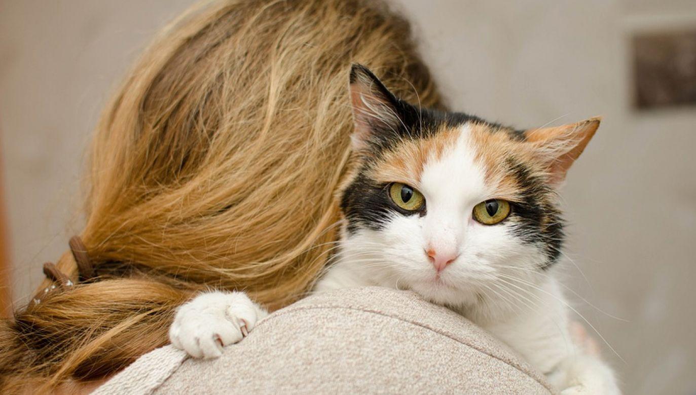 Koty potrafią wydawać rozmaite dźwięki (fot. Pixabay/Daga_Roszkowska)