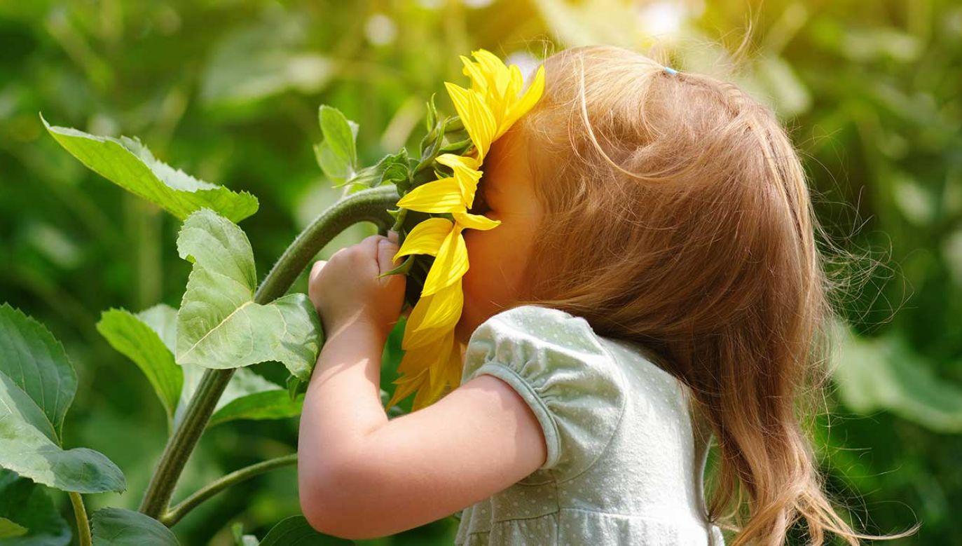Uczestnicy wypełniali kwestionariusze dotyczące częstotliwości kontaktu z naturą w dzieciństwie (fot. Shutterstock/irin-k)